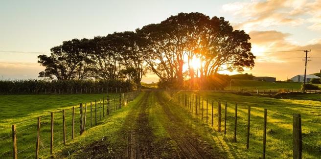 werner-sevenster-54429-unsplash Virginia Wine Tour WIDE